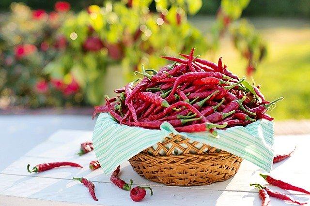 chilli papričky v ošatce
